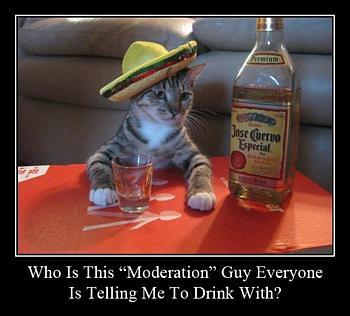 moderation-cat-350