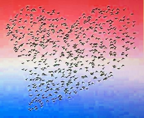 Flock-Heart1b